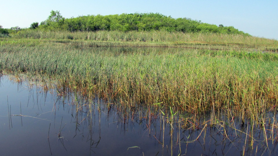 Everglades-Florida-USA