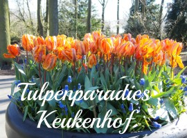 Tulpen im Keukenhof, Lisse