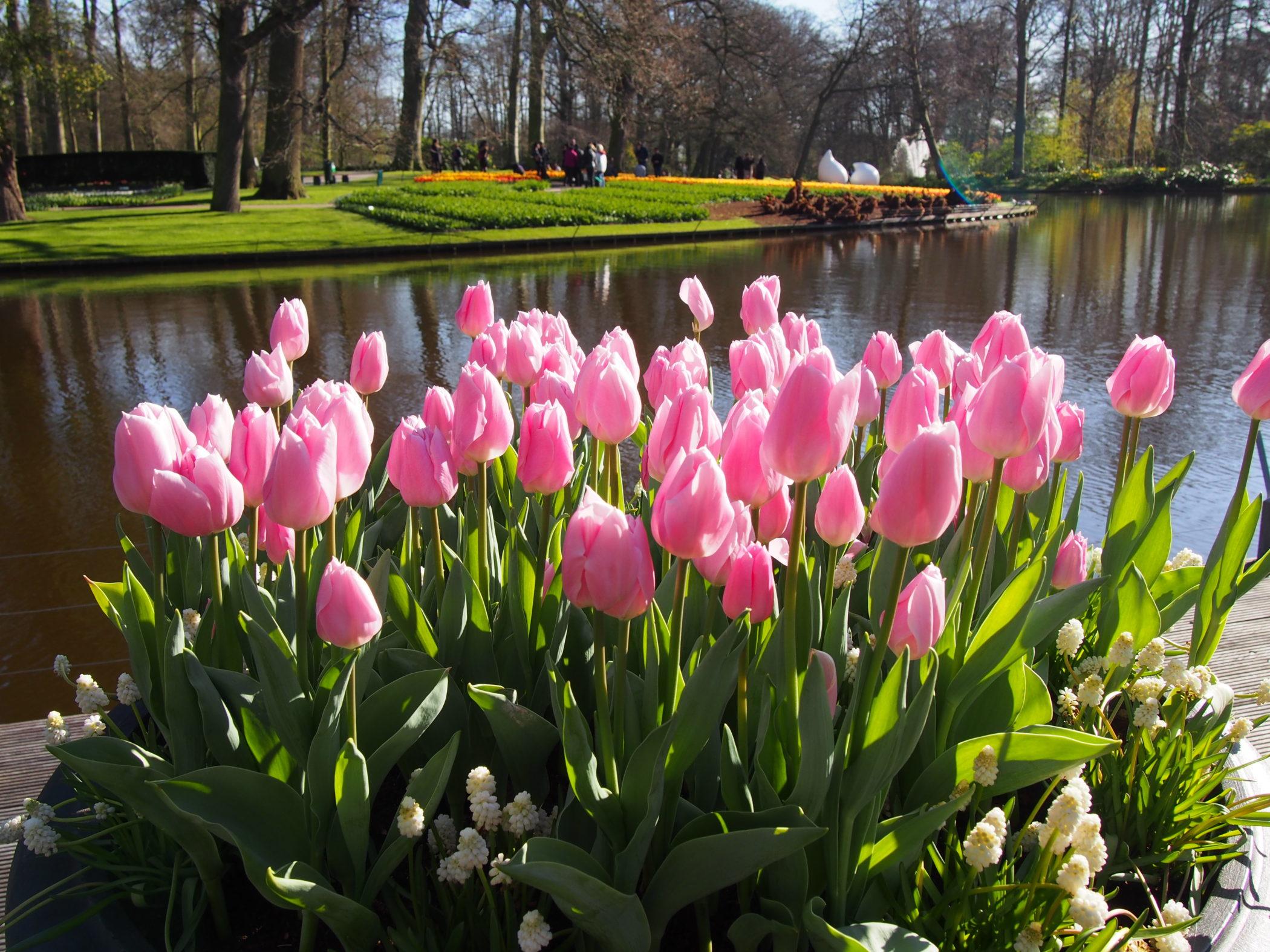 Keukenhof-Lisse-Holland-Niederlande