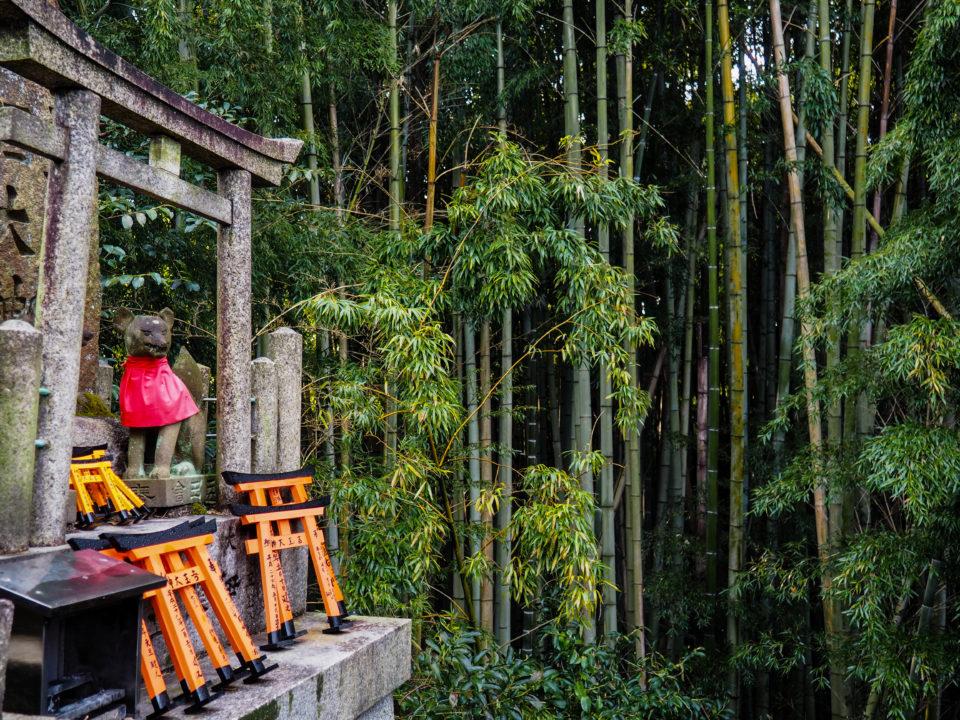 Japan-Kyoto-Bambus
