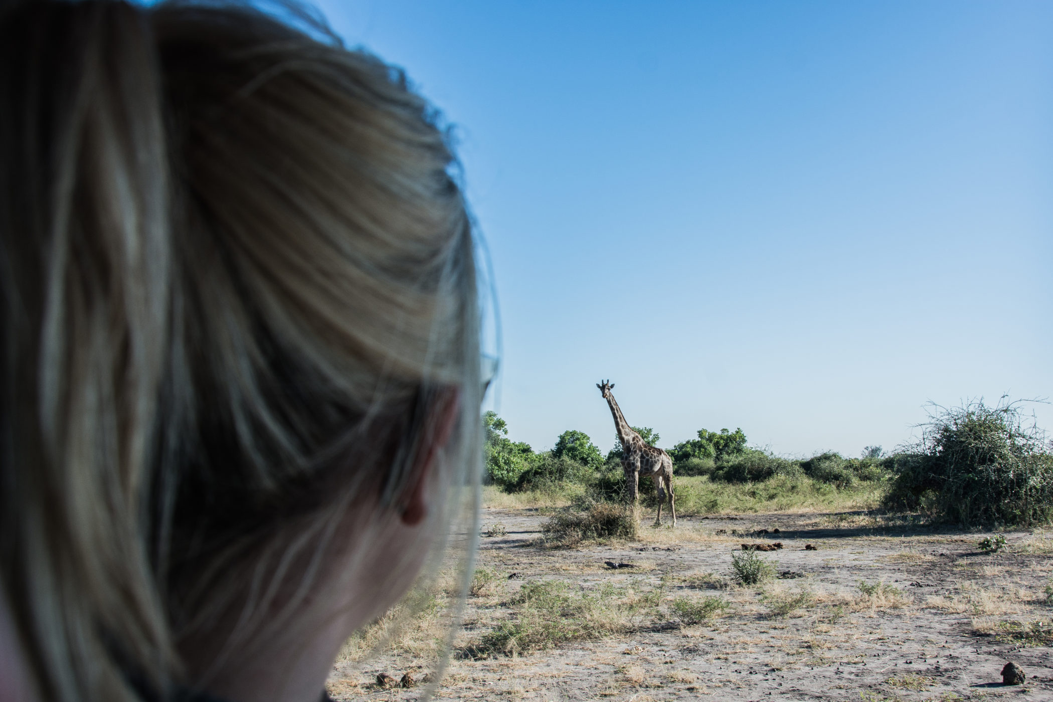 Afrika-Botswana-Giraffe-Vanessa