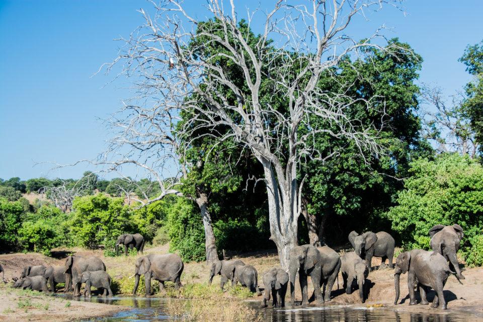 Afrika-Botswana