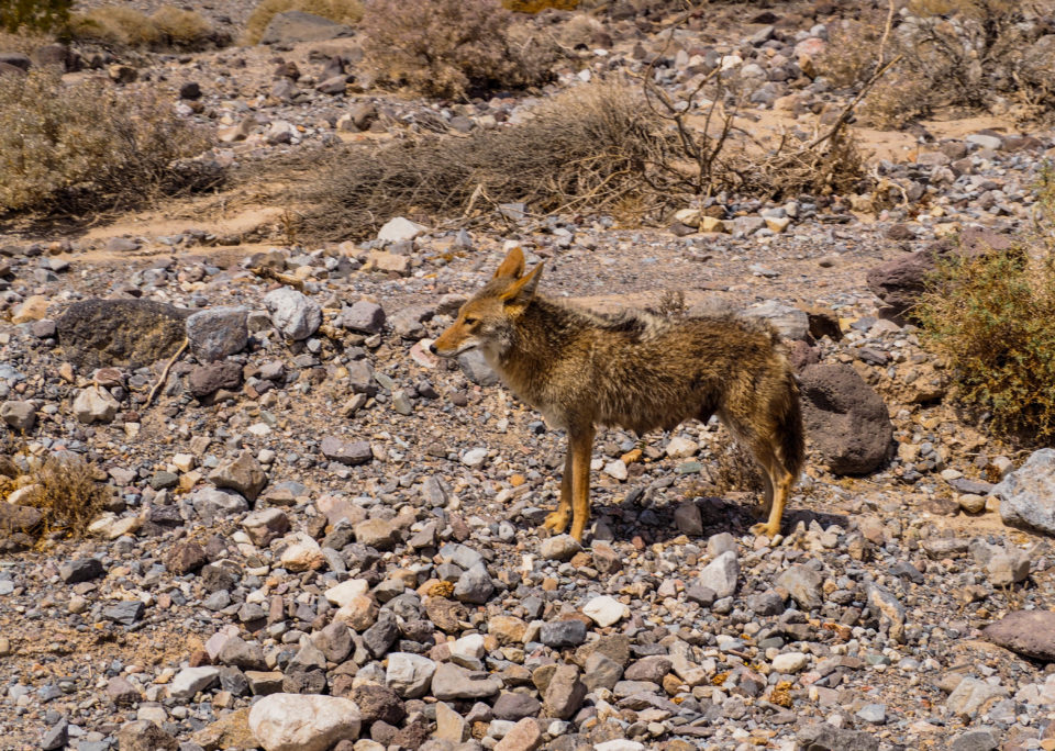Death-Valley-usa