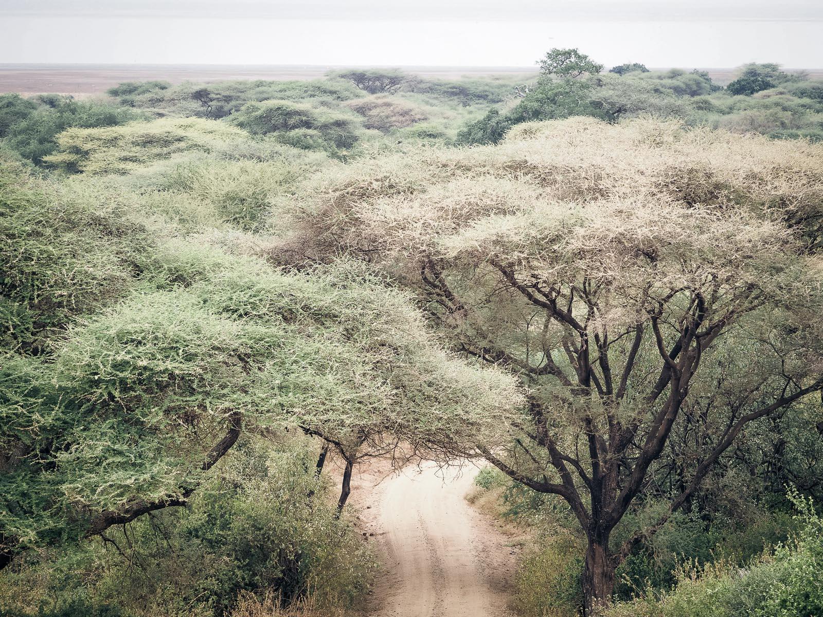 Afrika-Tansania-Lake Manyara