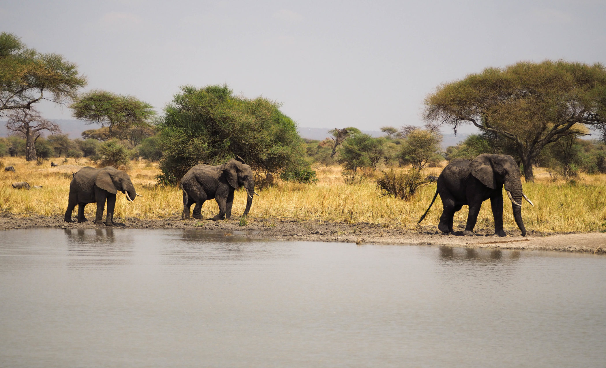 Tarangire-Nationalpark-Elefanten