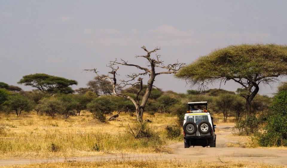 Tarangire-Nationalpark-Tansania-Jeep