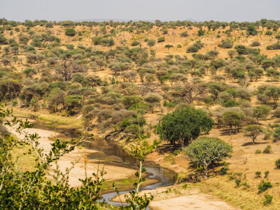 Tarangire-Nationalpark-Tansania