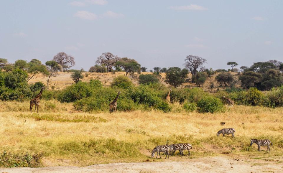 Tarangire-Nationalpark-Tansania-tiere