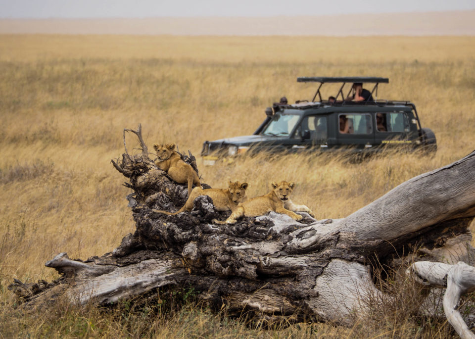 Tansania-Serengeti-Safari