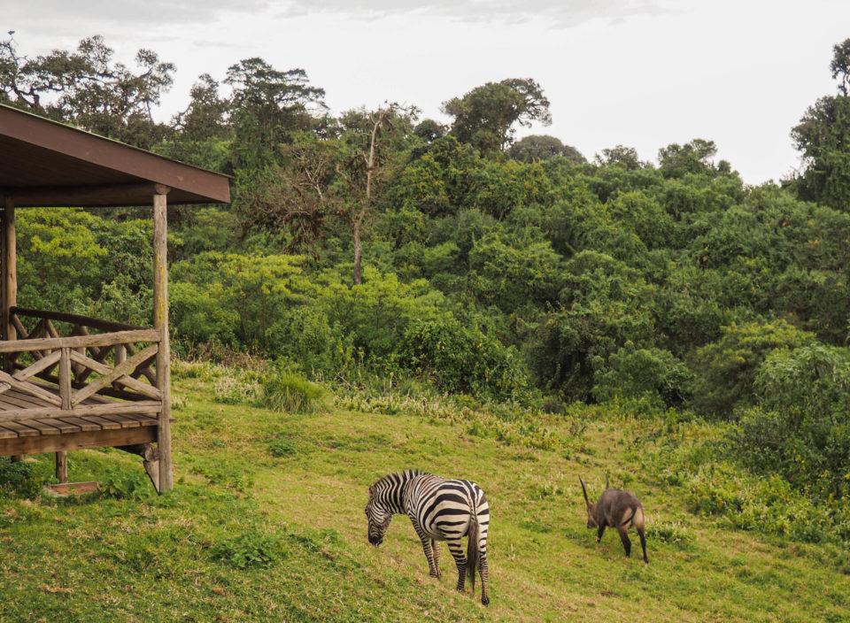 Tansania-Ngorongoro-Krater-Unterkunft