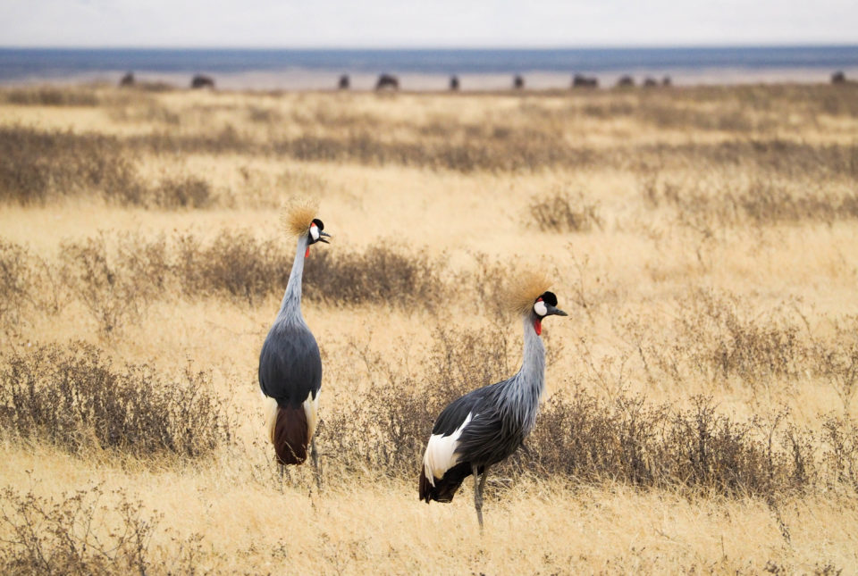 Tansania-Ngorongoro-Krater