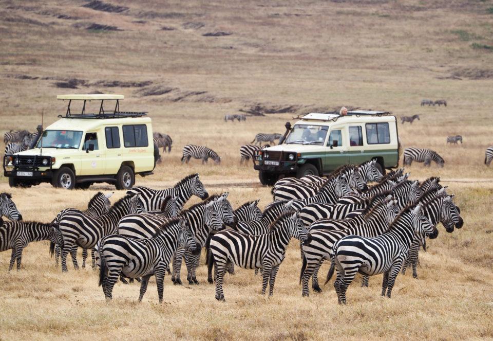 Tansania-Ngorongoro-Krater-Zebras