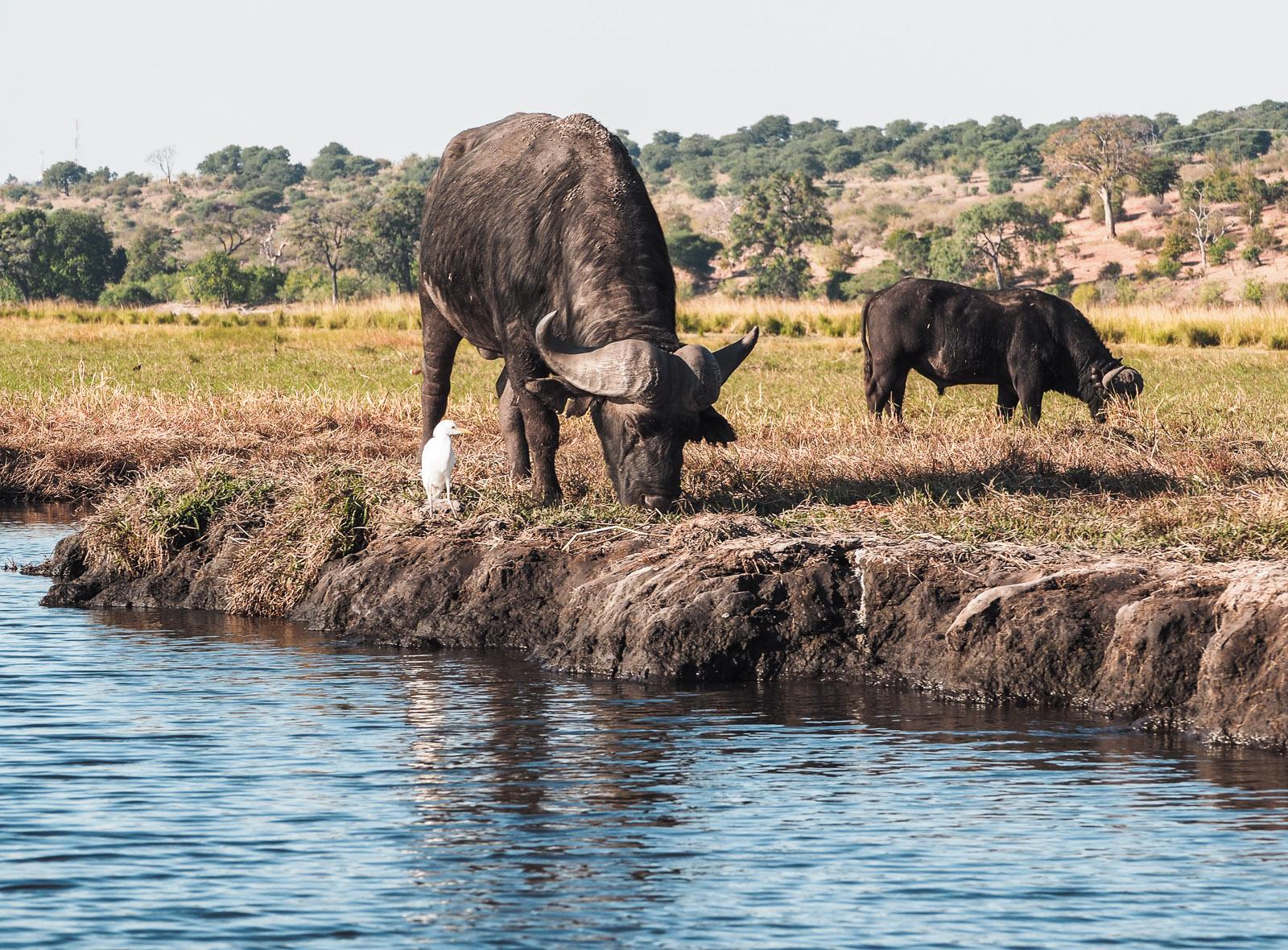 Afrika, Botswana, Chobe