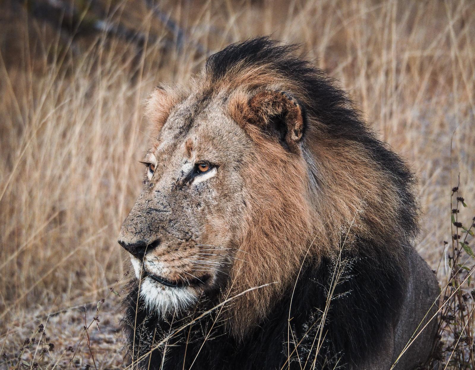 Afrika, Südafrika, Krüger Nationalpark