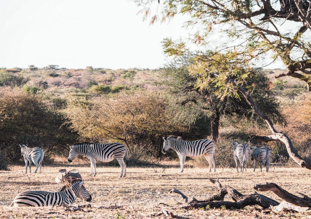 Botswana, Khama Rhino Sanctuary
