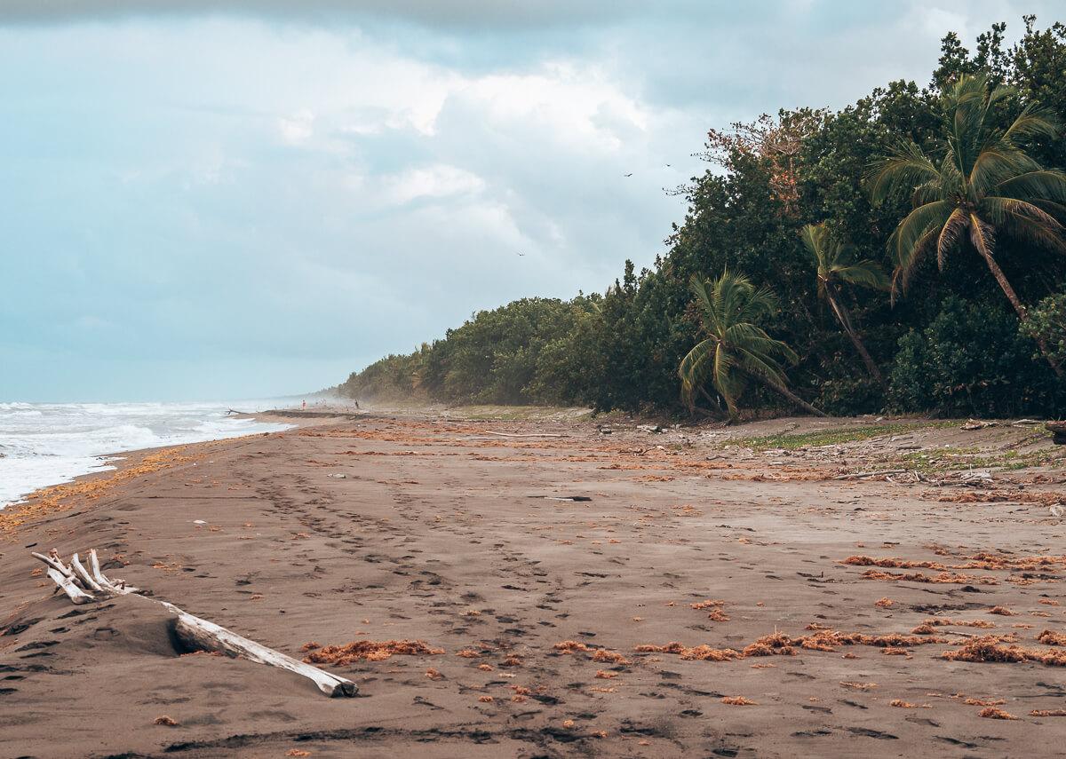 Strand im Tortuguero Nationalpark