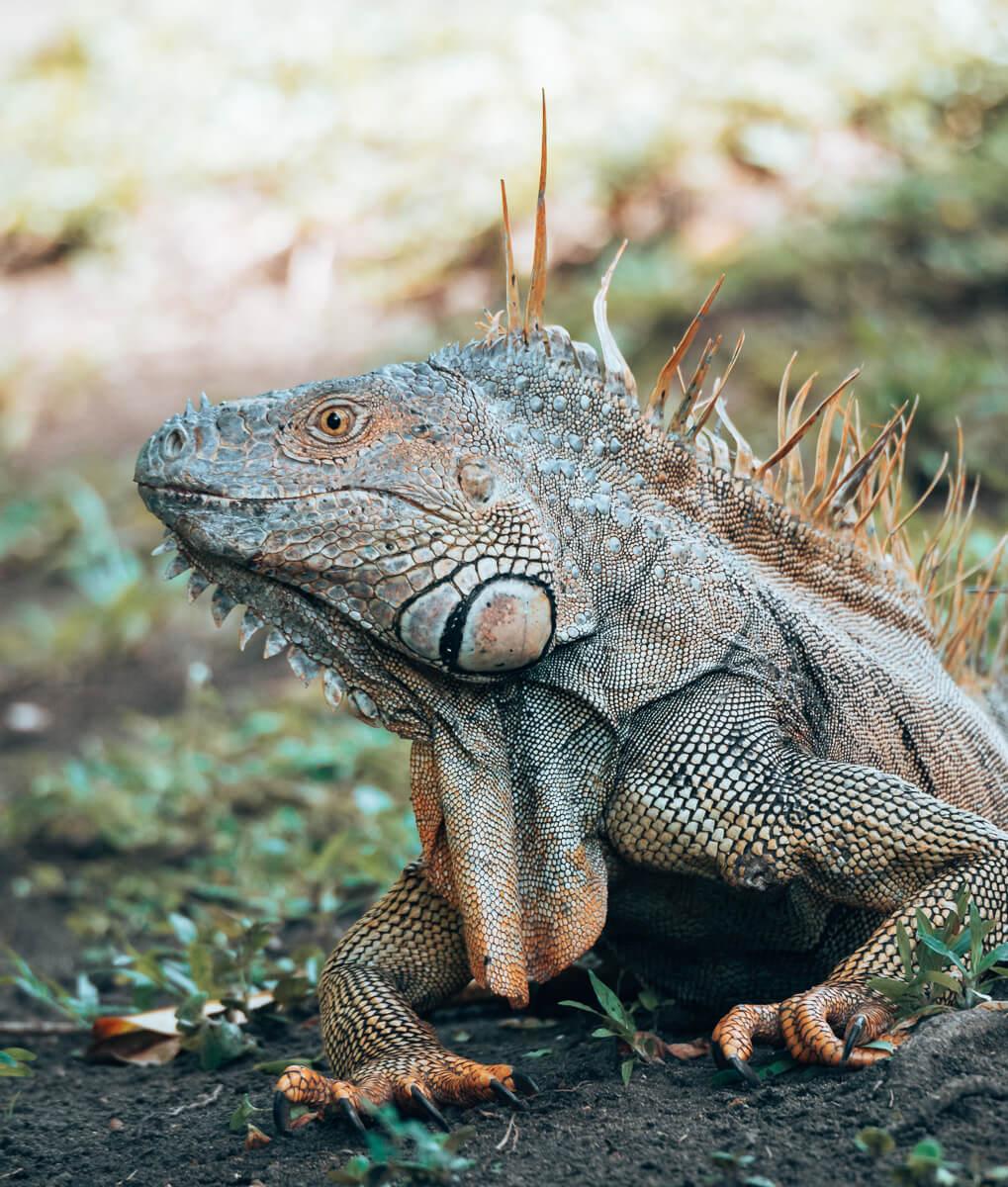 Wildlife im Tortuguero Nationalpark