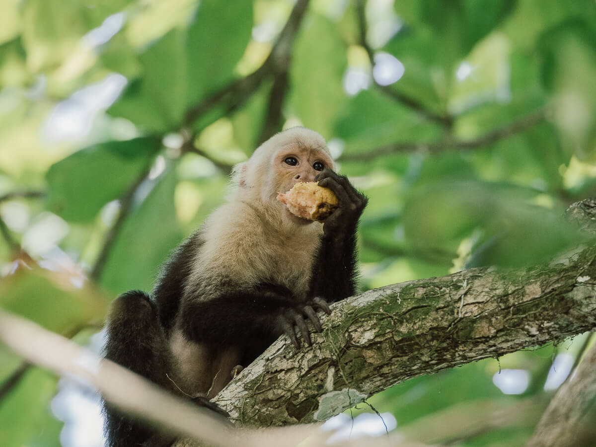 Costa Rica-Reise-Tipps